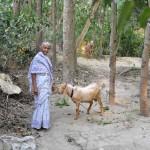 186BOBで購入した家畜のヤギと受益者の女性