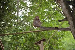 お寺の裏庭の猿